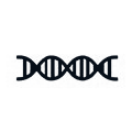 Molecular tests like PCR